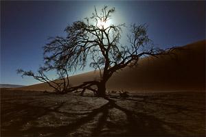 Baum im Gegenlicht Scanner