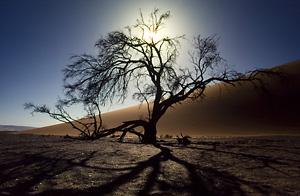 Baum im Gegenlicht DSLR